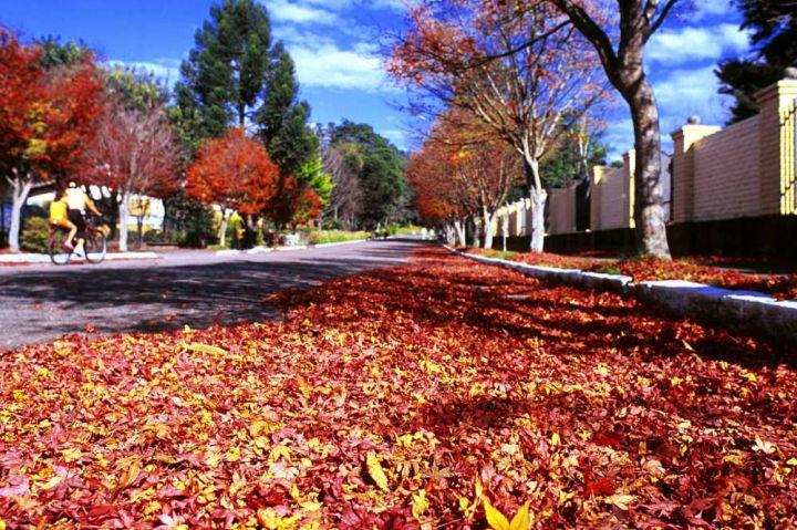 Destinos nacionais para curtir no outono